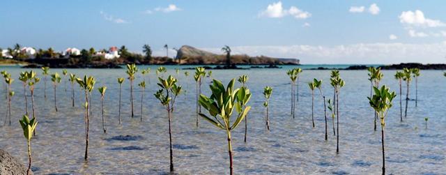 Växter i havet