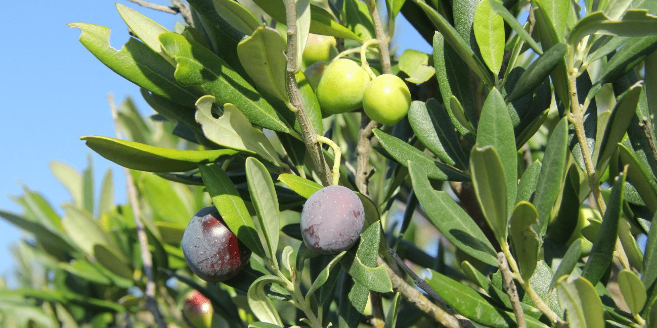 Passa på att plocka frukt och grönt vid avstigningar