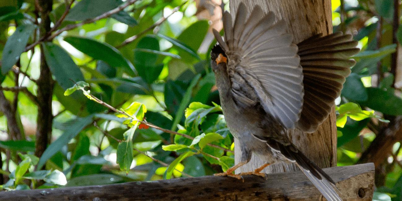 Välj resor till Seychellerna så får du se fantastiska djur
