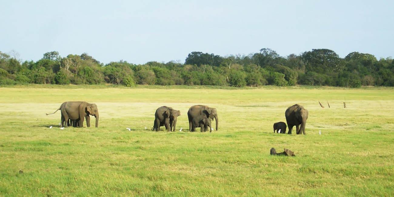 Se vilda djur som zebror, giraffer och elefanter