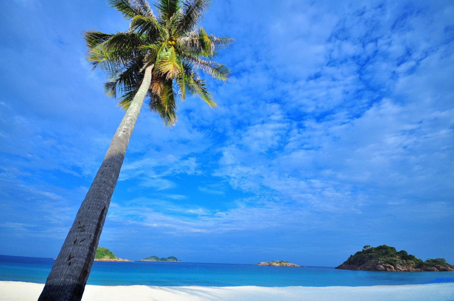 En paradisö med palmer, blå himmel och mjuk sand