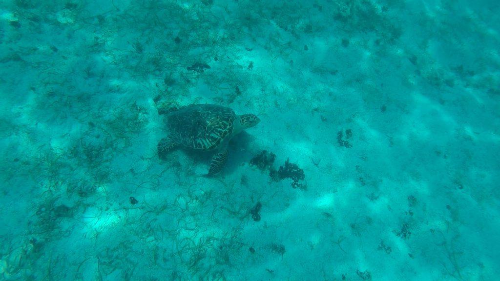 Segling i Karibien Bild 13