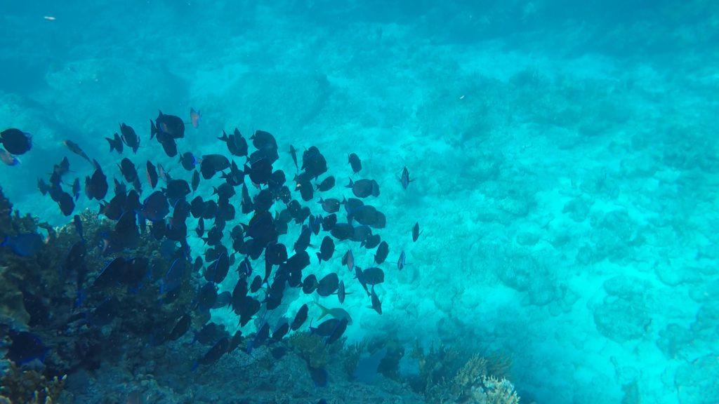 Segling i Karibien Bild 15