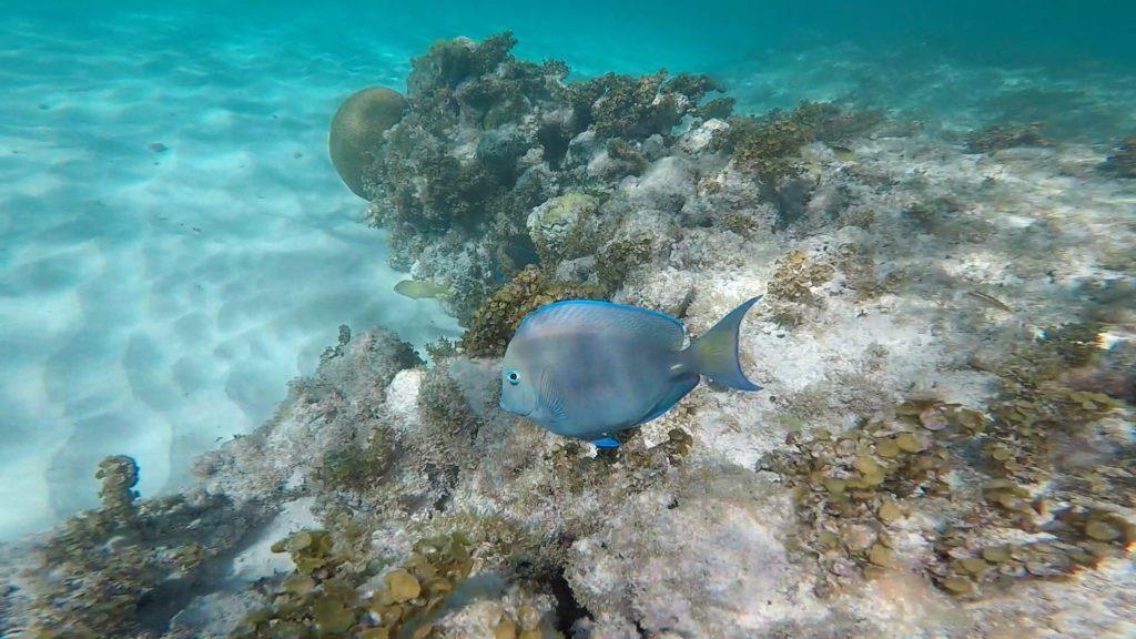Segling i Karibien Bild 6