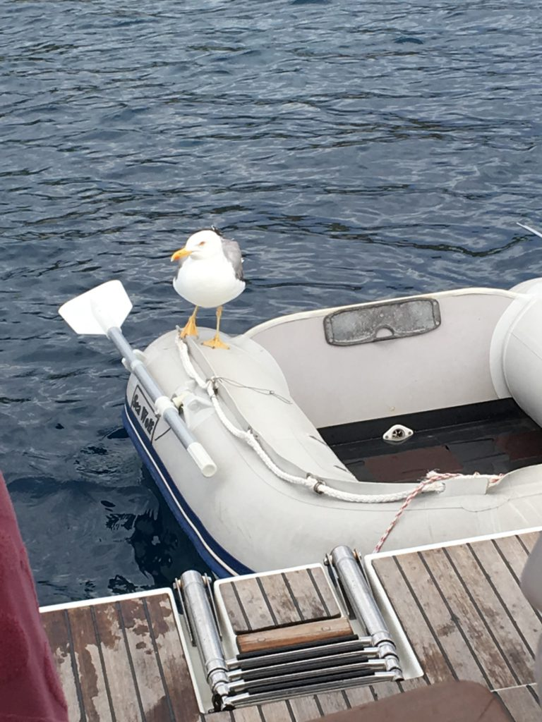 Hyr en jolle eller annan båt i Kroatien