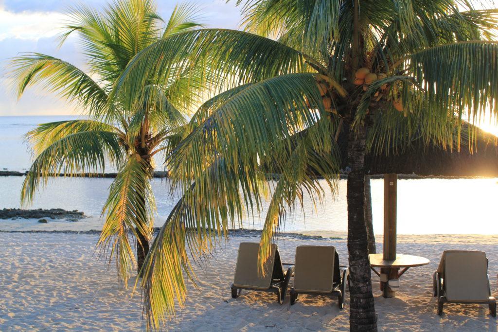 Sitt och sola bredvid en palm på stranden
