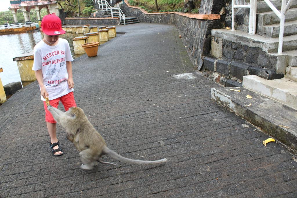 Apan plockar bananen från pojken