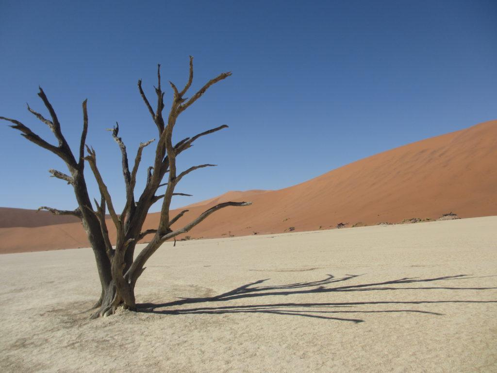 Detta träd ser ganska dött ut