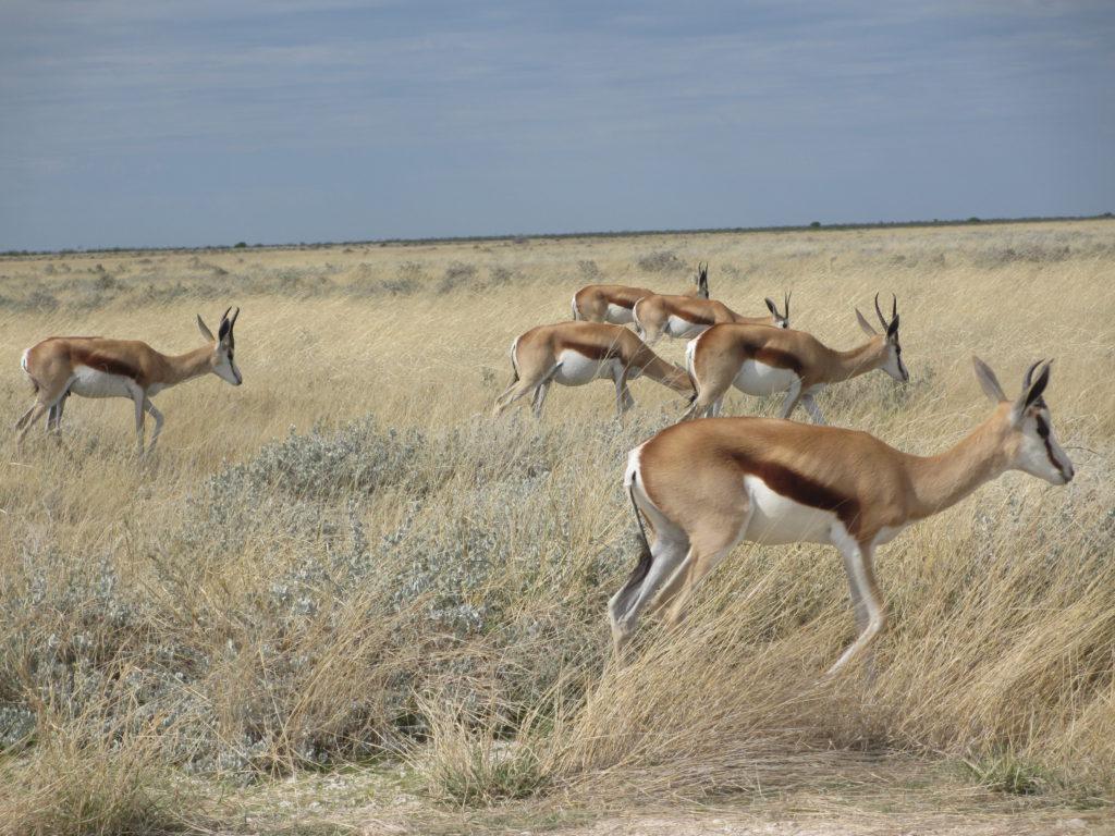 På en safariresa kan du se vilda djur