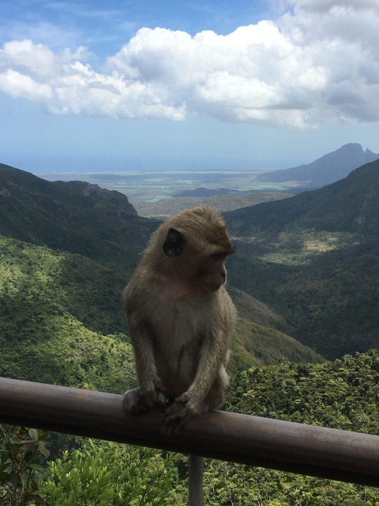 En söt liten apa på räcket