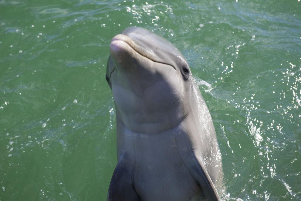 Res och lek med delfiner