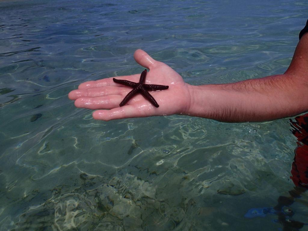 Plockar upp en sjöstjärna men andra kan vara giftiga!