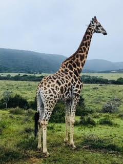 På paketresor eller rundresor på Mauritius kanske man får se vilda djur