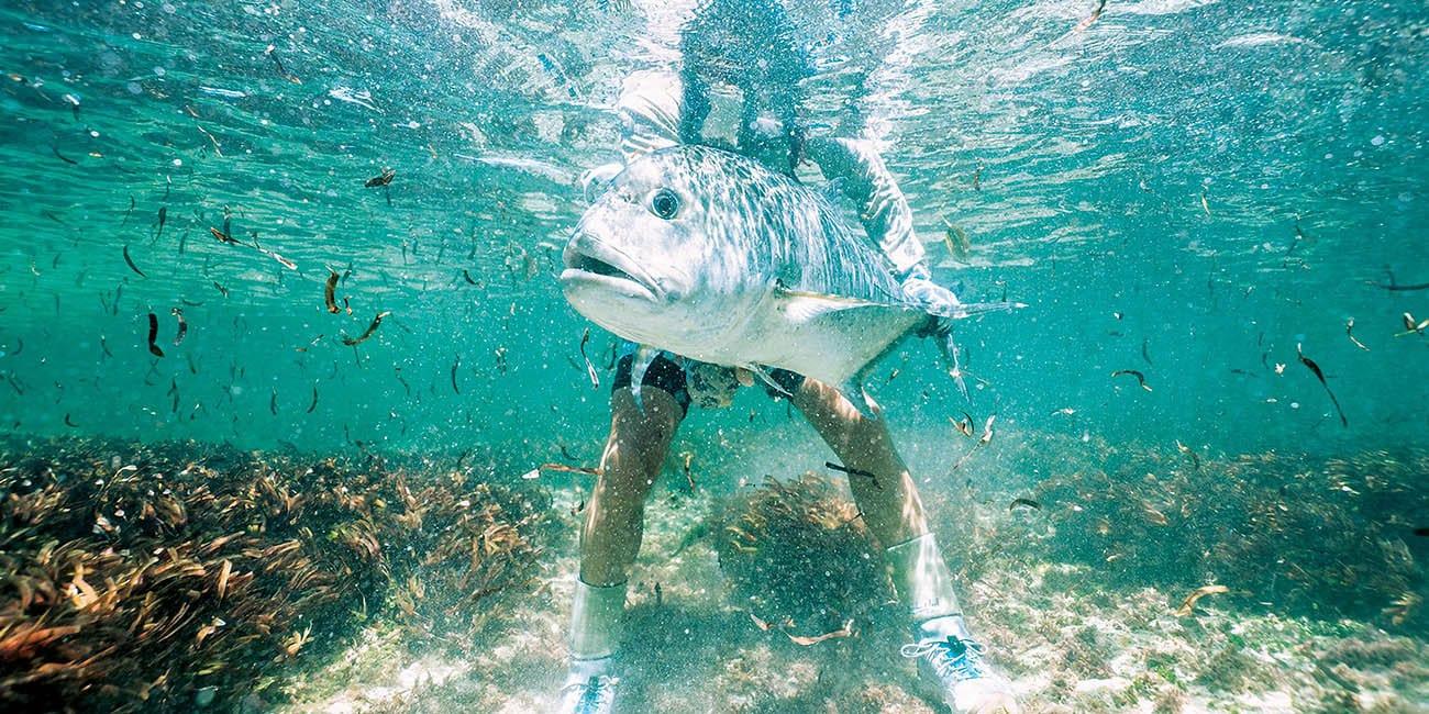 Här finns ett rikt djurliv både på land och under vatten