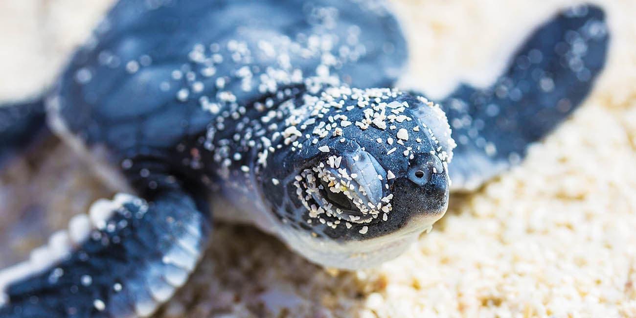 Gulliga djur som en sköldpadda på stranden