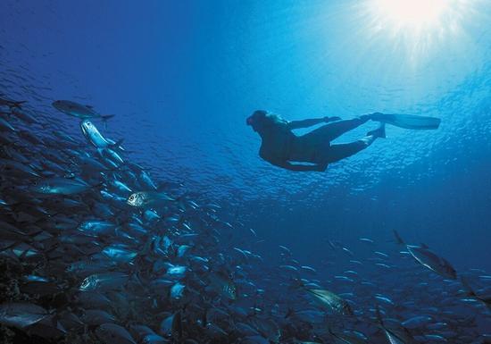 Dykning på Mauritius
