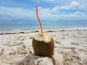 Kokosnöt på stranden, La Digue