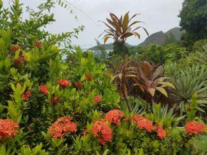 Frodig grönska Seychellerna