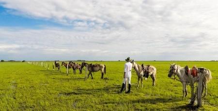 Cowboy-ridning över Llanos, Colombia